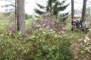 Brauciens uz Kālsnavas arboretumu_14