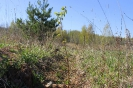Meža stādīšana 2014