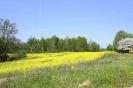 Zied rapšu lauki Ozolaines pagastā_5