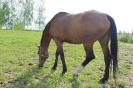 Zirgi Bekšos_11
