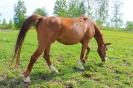 Zirgi Bekšos_13