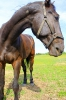 Zirgi Bekšos_16