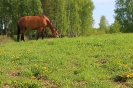 Zirgi Bekšos_19