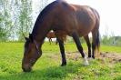 Zirgi Bekšos_24