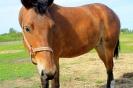 Zirgi Bekšos_25