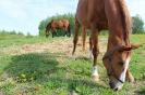 Zirgi Bekšos_29