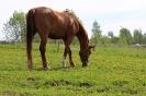Zirgi Bekšos_32