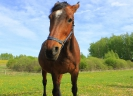 Zirgi Bekšos_7