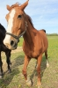 Zirgi Bekšos_8