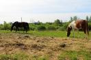 Zirgi Bekšos_9