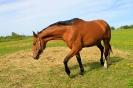 Zirgi Bekšos